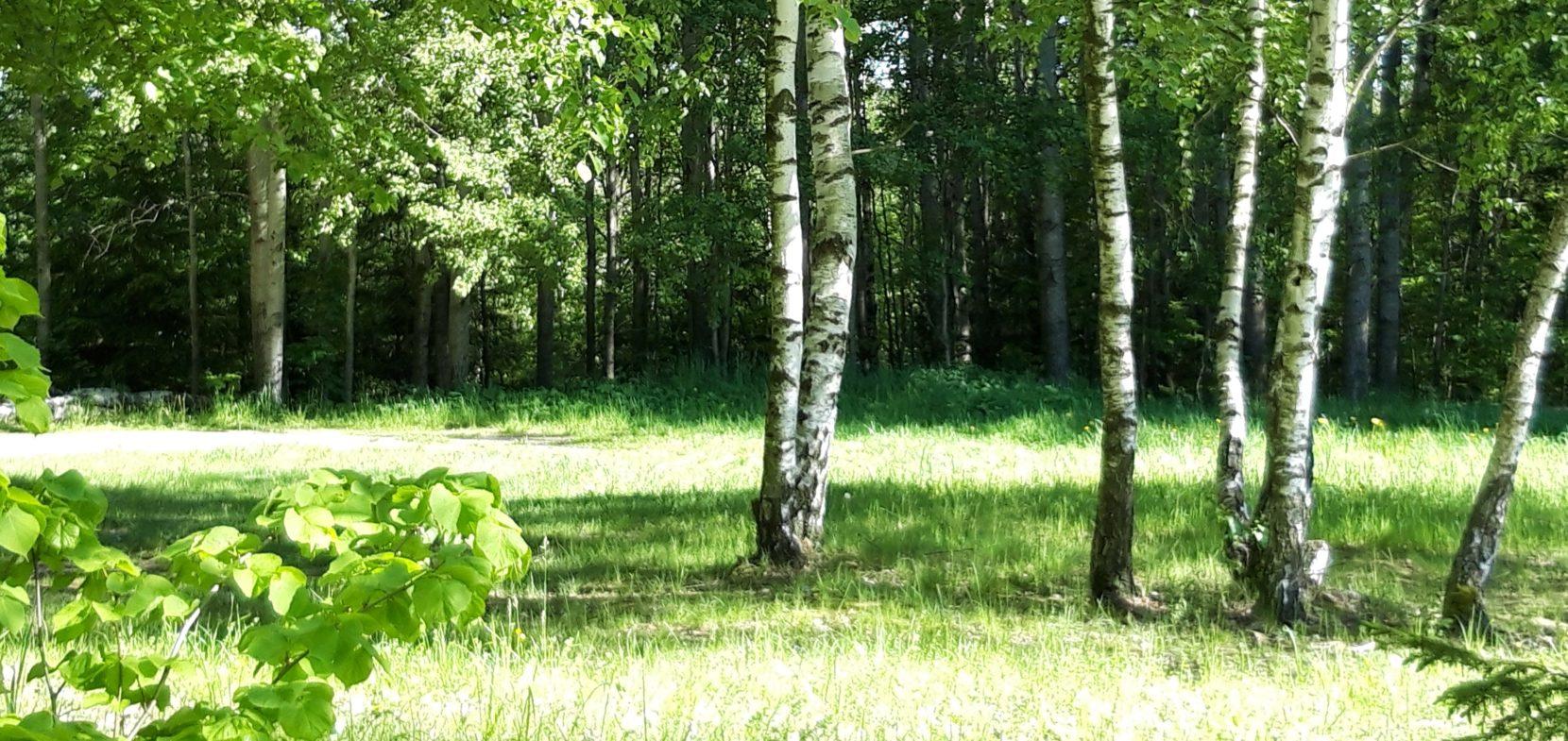 Kirchliche Waldgemeinschaft