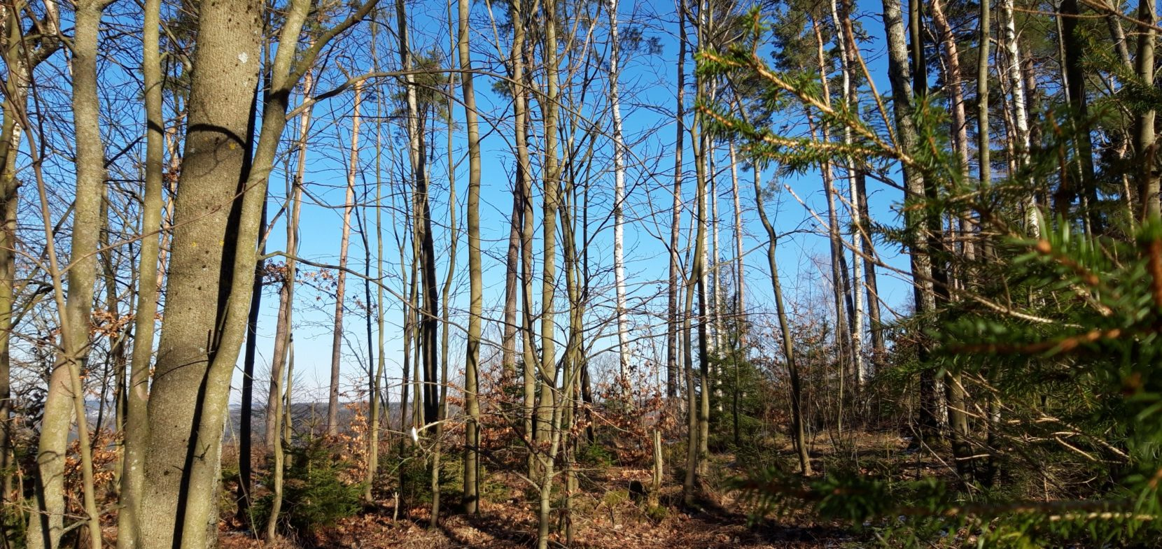 Kirchliche Waldgemeinschaft Vogtland